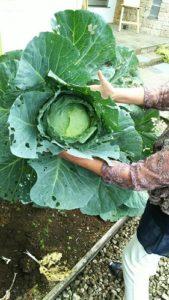 無農薬野菜 無添加住宅
